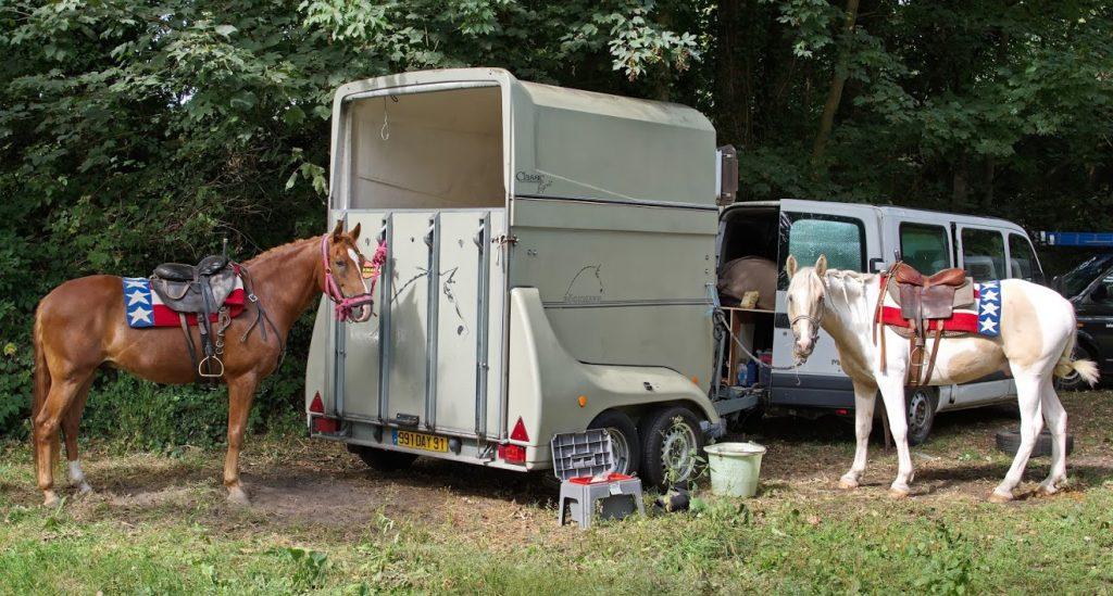 Paarden wachten op show